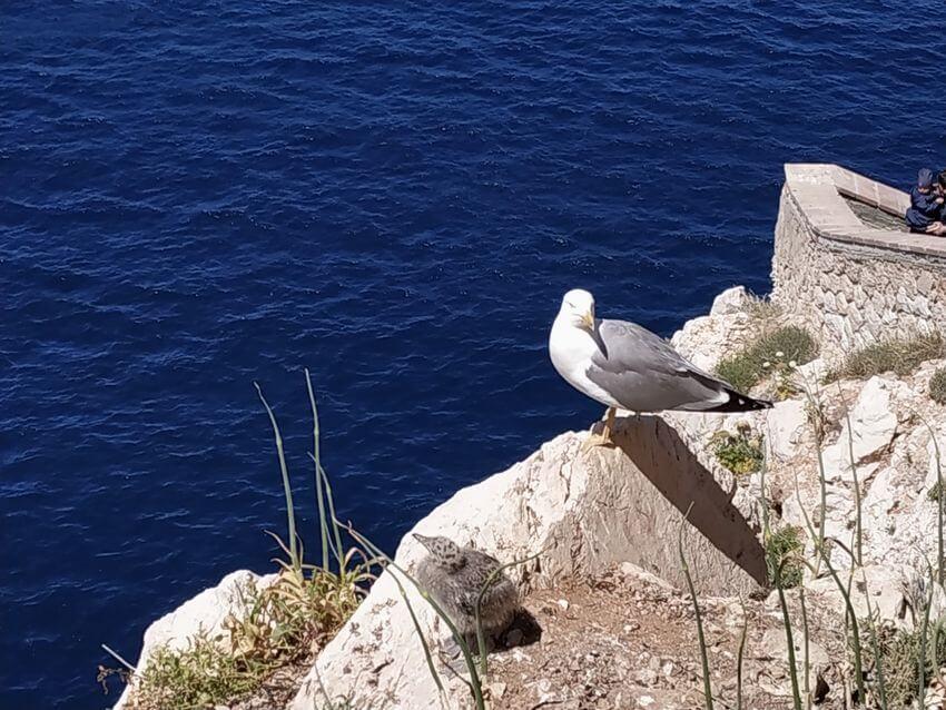 Rackove - Capo Caccia - Sardinie